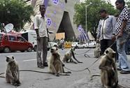 Bị khỉ cắn, được chính quyền bồi thường