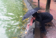 Thả cá, đừng thả túi ni-lông!