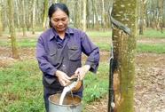 Đề xuất giảm tuổi nghỉ hưu lao động nữ cạo mủ cao su