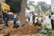 Bộ TN-MT làm việc với Hà Nội vụ chặt 6.700 cây xanh