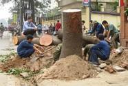 Hà Nội nói đã nghiêm túc rút kinh nghiệm vụ chặt cây xanh