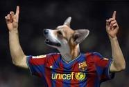 """""""Messi là một chú chó biết đá bóng"""""""
