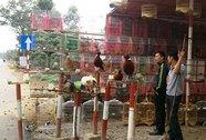 Bày bán chim trời tràn lan ở vùng dịch