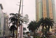 """Vụ chặt cây xanh ở Hà Nội: """"Quên"""" hình thức kỷ luật?"""