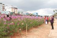 Đà Lạt ngập tràn sắc hoa hồng ri