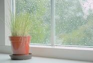 TP HCM có sương mù và mưa nhỏ trong nhiều ngày liền