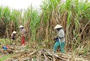 Thu hẹp diện tích để cứu nông dân