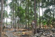 Vườn kinh bằng đá độc nhất vô nhị Việt Nam