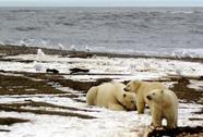 Hiện tượng thời tiết kỳ lạ tại Bắc Cực