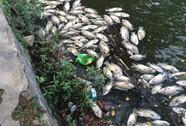 Hơn 1 tấn cá chết nổi trắng hồ trong công viên Đà Nẵng