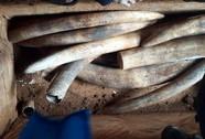 Lô hàng trăm tỉ nghi ngà voi ở cảng Cát Lái