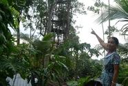 Lạ lùng cụ ông chỉ thích ở trên… ngọn cây!