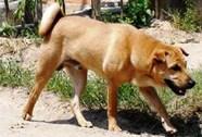 Thanh Hóa: Nhiều người bị chó dại cắn