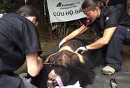 Giải cứu gấu ngựa ra khỏi Khu Du lịch Đam B'ri