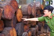"""""""Cõng"""" gỗ quý khỏi rừng, ông Hổ bị phạt 150 triệu đồng"""