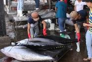EU ngày càng chuộng cá ngừ Việt Nam