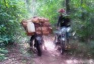 Truy bắt gỗ, 1 lâm tặc chết, 2 kiểm lâm bị thương