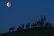 """Ở đâu tốt nhất để ngắm """"siêu trăng"""" thế kỷ?"""