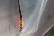 Truy tố băng trộm chuyên rọc mùng vùng U Minh Thượng