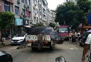 Trung Quốc: Bị bắt vì chở cá mập voi quý hiếm bán cho nhà hàng