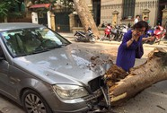 Trời nắng gió nhẹ, cây cổ thụ đổ đè lên xe Mercedes giữa phố