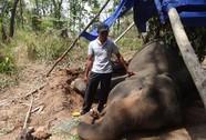 Khẩn cấp cứu voi