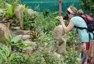 Vườn bướm mê hoặc người ở Khánh Hòa
