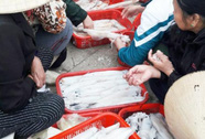 Sướng gì bằng đi chợ cá Cửa Sót sáng tinh mơ
