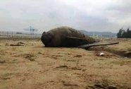 Hai con cá heo chết trôi dạt vào bờ biển Thanh Hóa