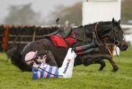 Trả giá đắt vì đấm vào bụng ngựa đua