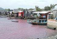 Hồ nước thải chuyển màu tím do tảo nở hoa