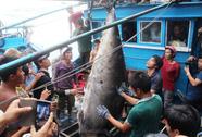 Cá ngừ vây xanh 307 kg lập kỷ lục