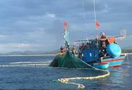 Săn cá nhồng, cá trích giữa biển đêm