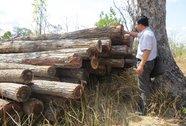 Làm lơ lệnh đóng cửa rừng