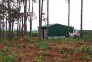 """RỪNG VẪN """"CHẢY MÁU"""": Ngang nhiên mua bán đất rừng"""