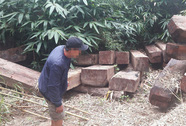Khởi tố vụ gỗ vứt đầy đường biên ở Kon Tum