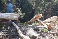 Tan nát rừng phòng hộ Đắk Hà