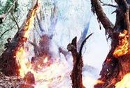Cháy 30 ha rừng tràm tái sinh ở An Giang