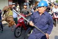 Chủ ngơ ngác nhìn chó thả rông bị bắt