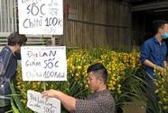 Địa lan Trung Quốc chỉ 100.000 đồng/cành