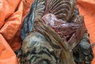 Phát hiện 5 con hổ lớn trong nhà một người dân