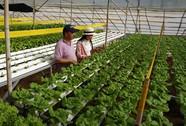 """Thu nhập """"khủng"""" nhờ trồng rau"""