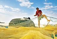 Theo chân ngư dân săn cá khoai trên biển