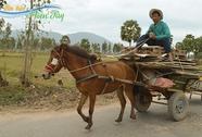 Chiều cuối năm nao lòng với tiếng xe ngựa miền Tây