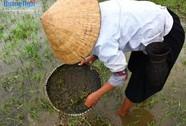 Nổi da gà với món đặc sản nòng nọc ở Ba Tơ