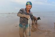 Săn cá chình mỡ ở biển Gò Công