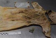 Người mẹ 42 năm tìm xác con