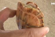Người dân bắt được rùa vàng lạ ở Tân An