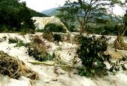 Lũ quét bất ngờ, hàng chục hecta vườn cây bị hư hại