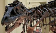Hoảng hồn vì cú cắn của khủng long bạo chúa